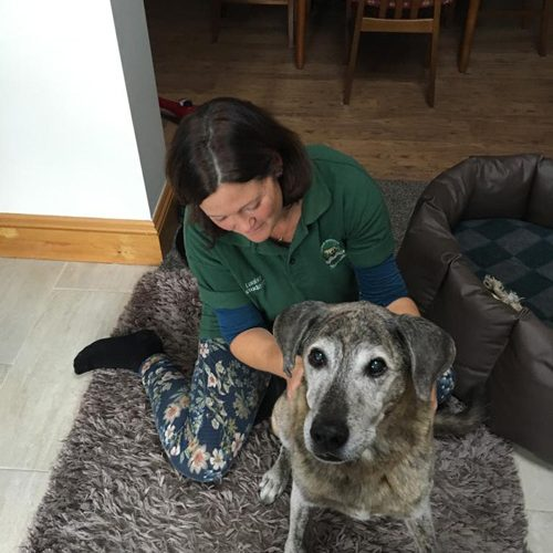 Clinical Canine Massage